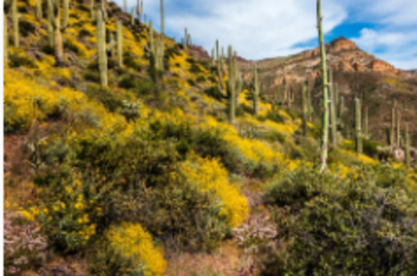 Spring on the Arizona Trail