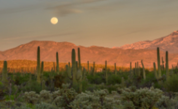 Moonrise Over Sabino Canyon