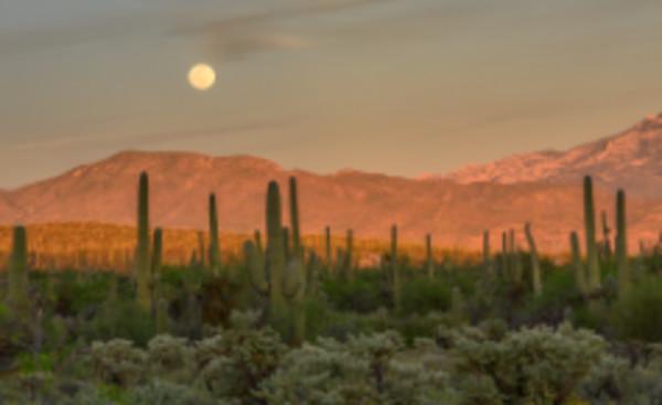 Moonrise Over Sabino Canyon