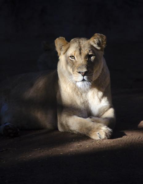 Kaya, Reid Park Zoo