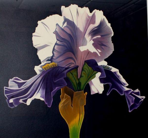Morning Iris