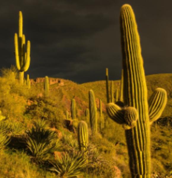 Sonoran Storm