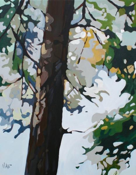 Pine Fall 1