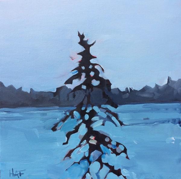 Pine on Blue