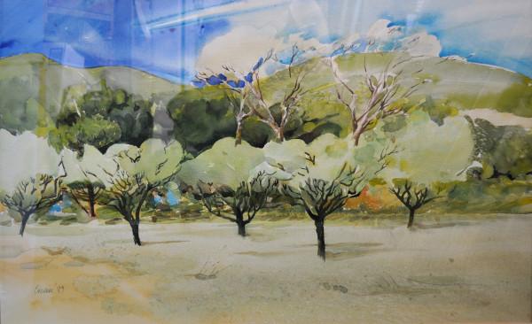 Beyond the Almond Grove