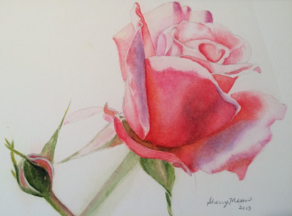 Redoute Rose Study, 5 x 7 original watercolor, © Sherry Mason