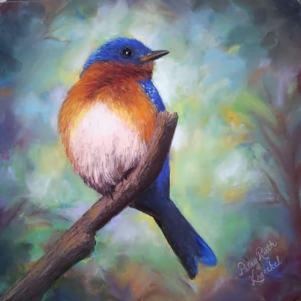 Eastern Blue Bird Beauty