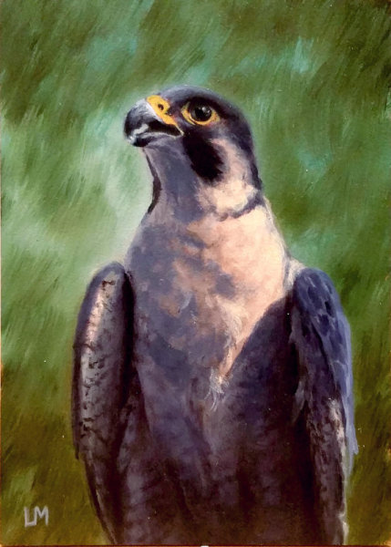 Falcon ACEO SOLD