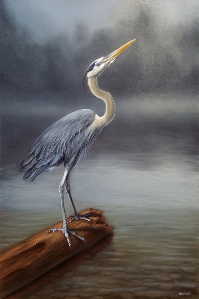 Blue Heron AVAILABLE