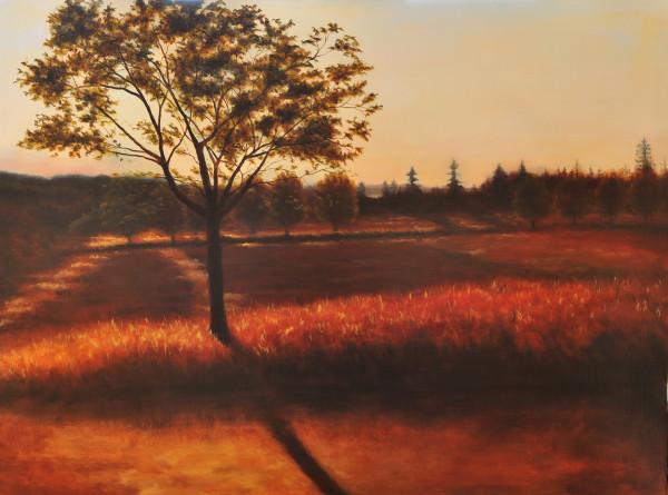 Lightcatcher (on canvas)