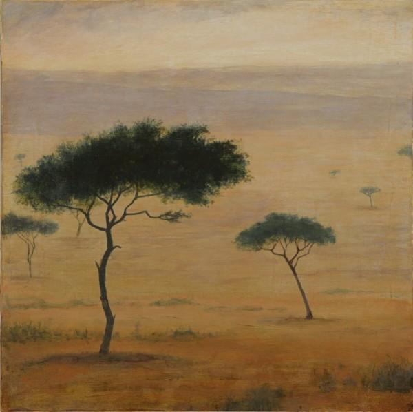 Acacia Dreaming