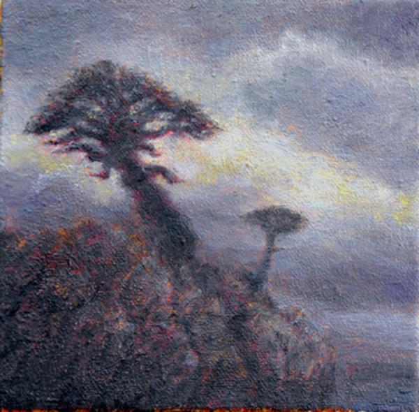 Coastal Pines Overlook I