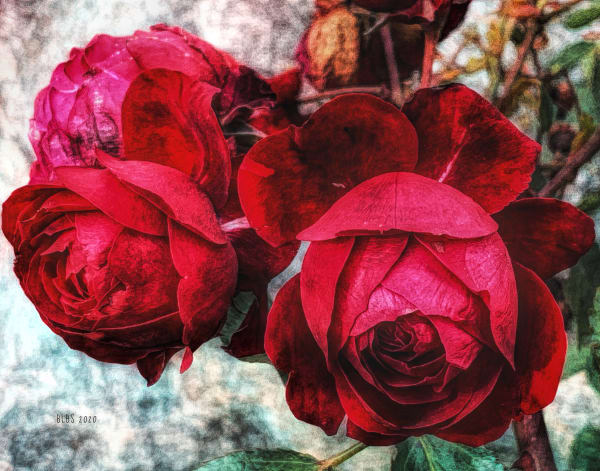 Antique Red Roses