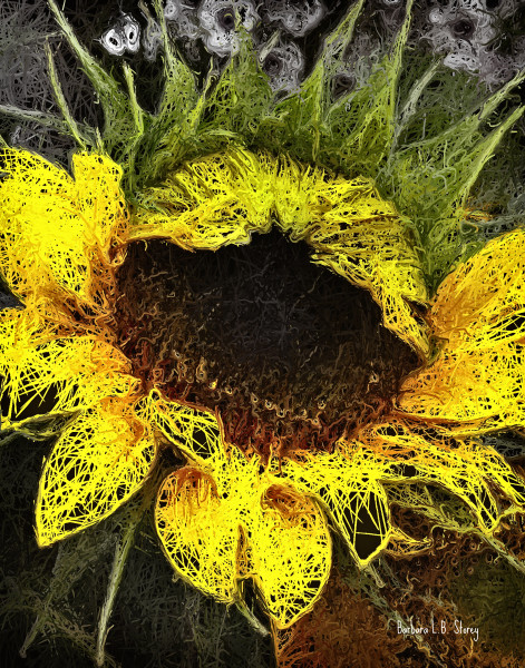 Lacy Sunflower