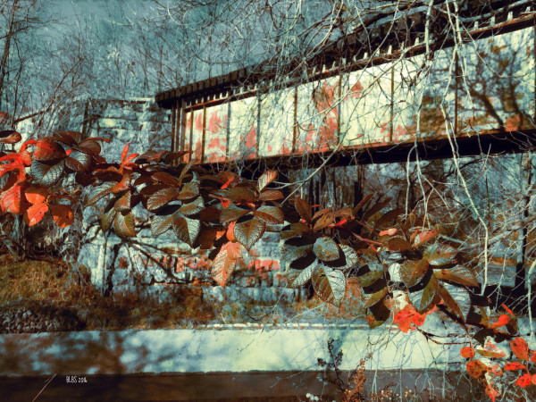 Autumn Leaves by Train Trestle