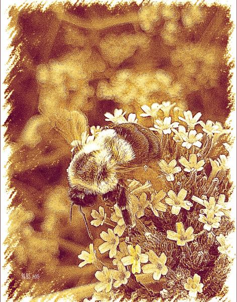 Honey Bumble Bee