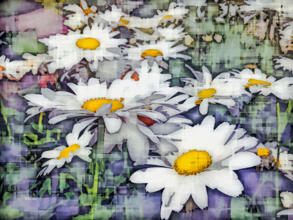 Impressions of Daisies