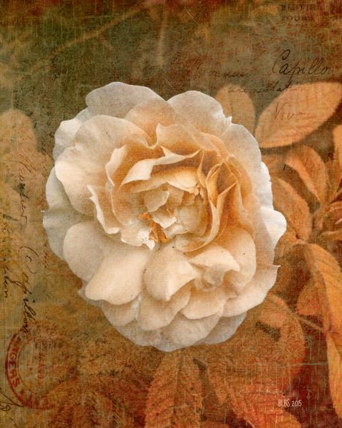 Vintage Copper Rose