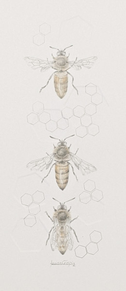 Honey Bee 3.23e