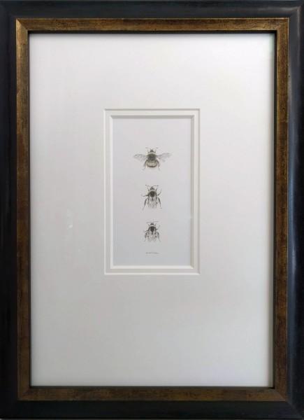 Buff tailed BumbleBee 3.9