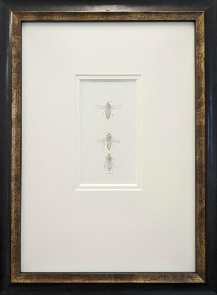 Honey Bee 3.24