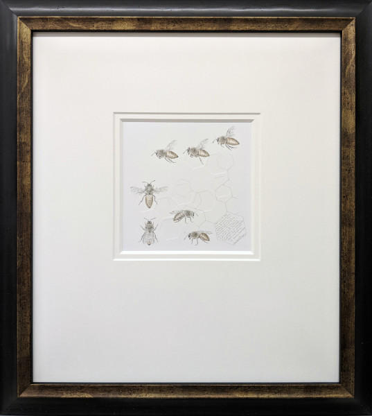 Study of a  HoneyBee 004