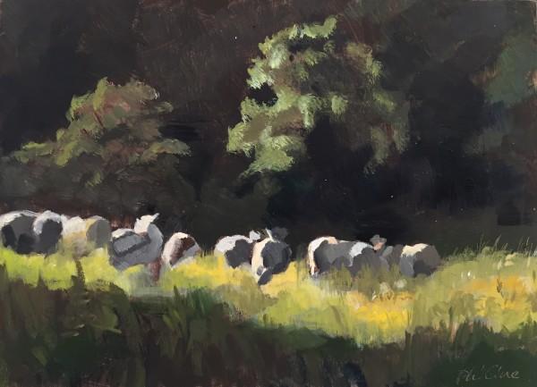 Sheep at Greenfort