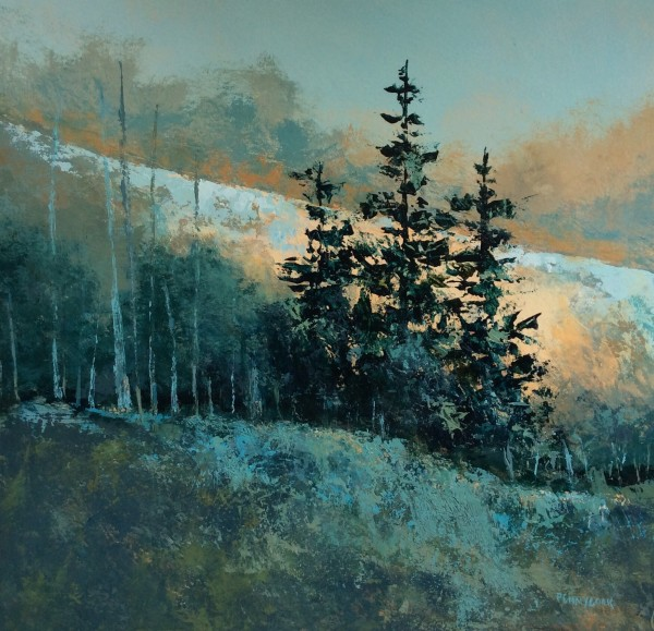 Evening Spruce