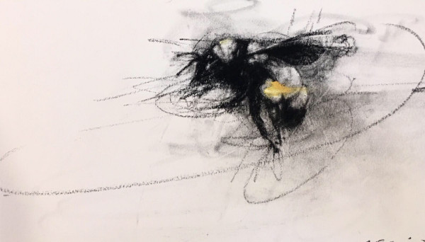 Sonoran Bumblebee in Flight (bombus sonorus, female)