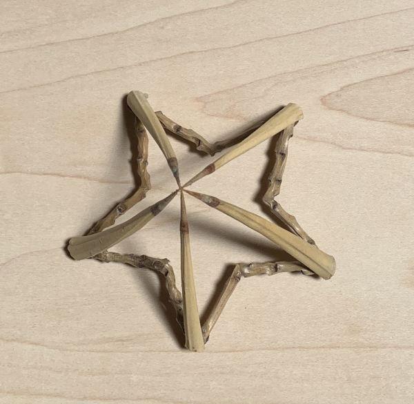 5 Point Star