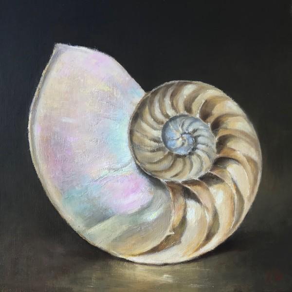 Nautilus Study
