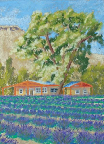 Abiquiu Lavender Fields