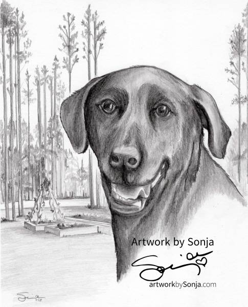 Black Labrador Retriever Memorial Drawing