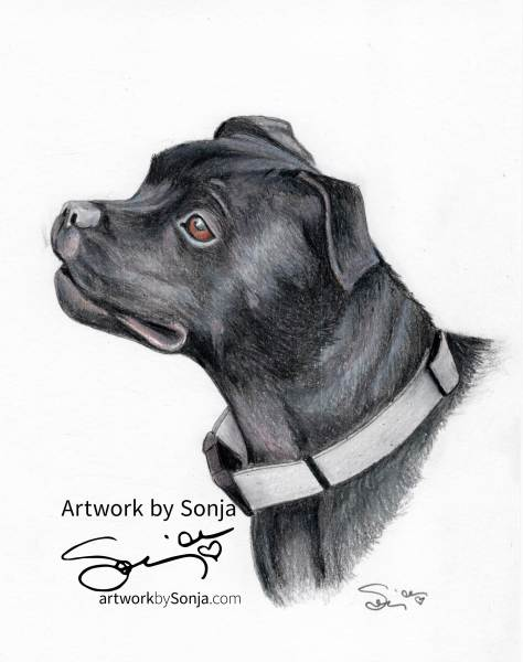 Pitbull Pet Portrait by Sonja