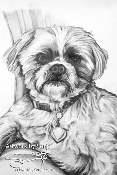 Westie Pet Portrait by Sonja