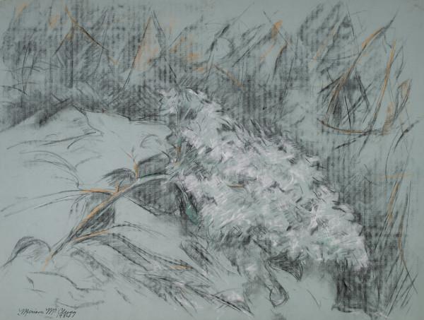 White Hydrangeas 1