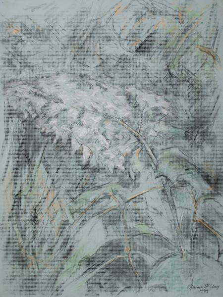 White Hydrangeas 3