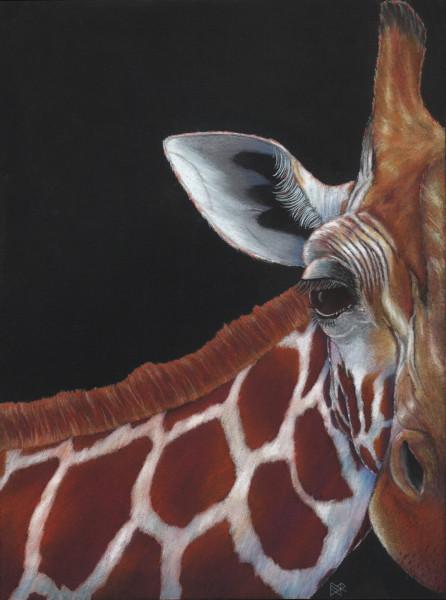 PatternEyes Series - Giraffe