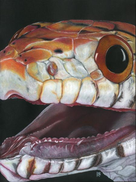 PatternEyes - Corn Snake