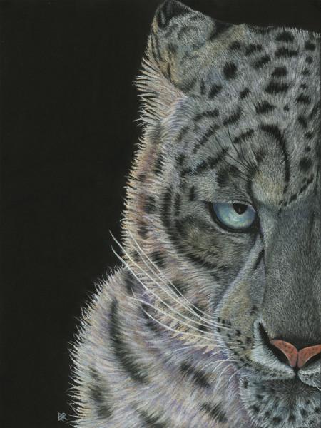 PatternEyes - Snow Leopard