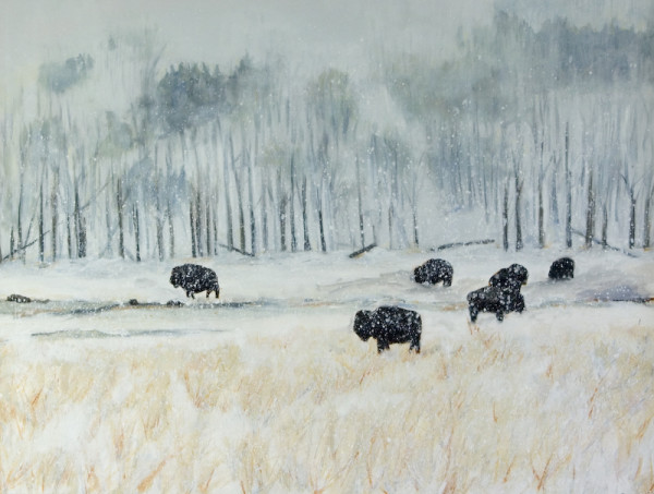 Buffalo in Snow