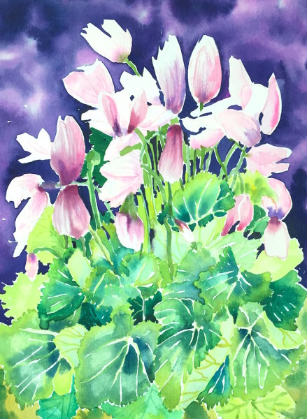 Cyclamen with Purple