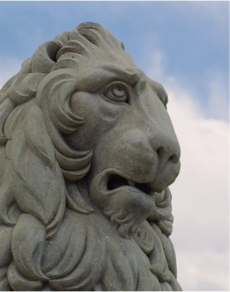 Marzocco Lion (Head Shot)