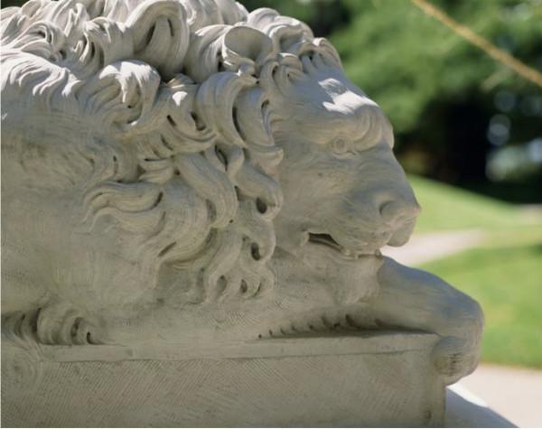 Resting Lion (mean lion)