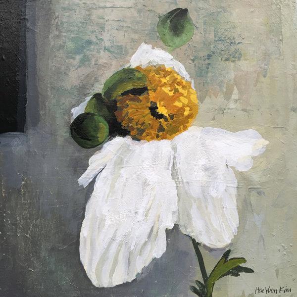 Mantilla Poppy
