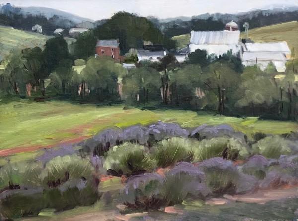 Springfield Manor Lavender Field