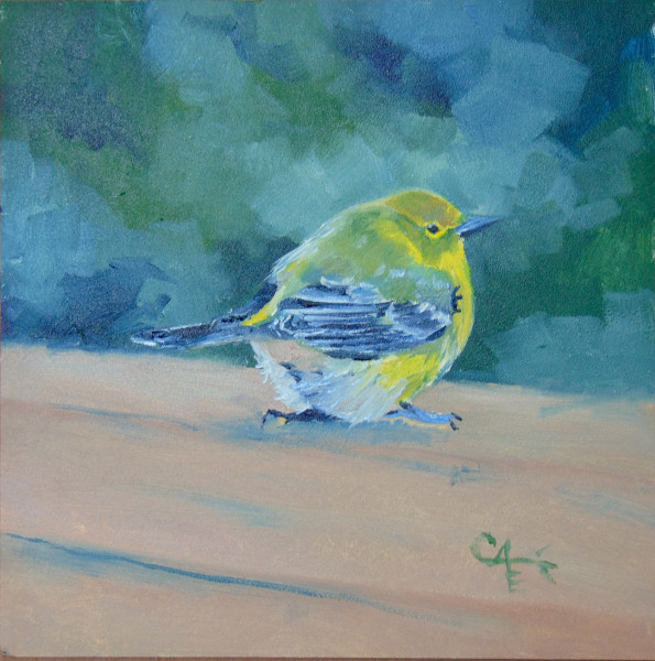 Pine Warbler on the Deck