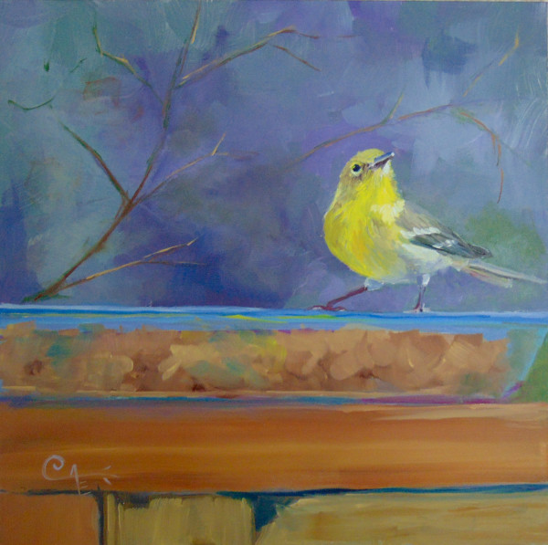 Lunch at the Pie Plate II: Pine Warbler