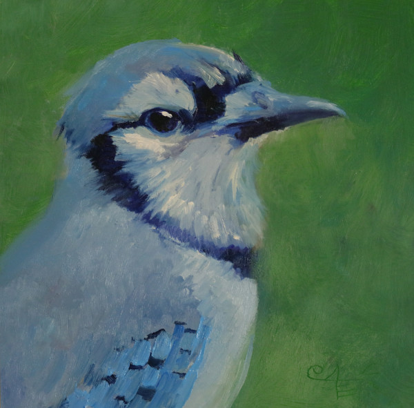 Blue Jay: Up Close and Personal