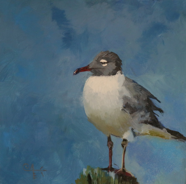 Laughing Gull II